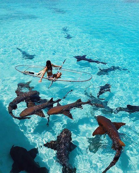 Sea kayaking to the Exumas, The Bahamas Les Bahamas, Exuma Bahamas, Bahamas Vacation, Photos Voyages, Canoe And Kayak, Travel Goals, Travel Vlog, Solo Travel, Marine Biology
