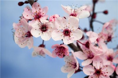 Welcome Plant Feng Shui What To Consider Choose The Right Plant And You Will Benefit A Lot Because Your Garden A Plum Blossom Plants White Chocolate Truffles