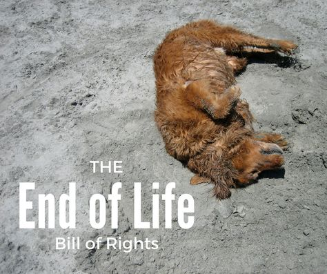 The Dying Pet's Bill of Rights | Pawcurious: With Veterinarian and Author Dr. V
