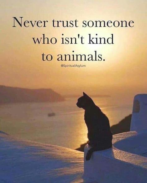 Never trust someone who isn't kind to animals.