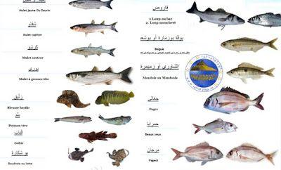 U202bرفراف الشاطئ U202c U200e كل أسماء السمك في تونس و صورها 100 نوع In 2021 Movie Posters Poster Movies