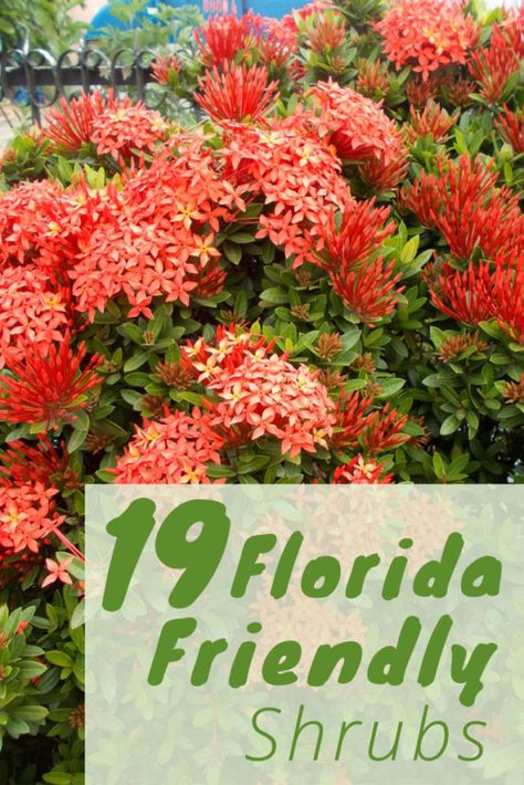 The Best Shrubs to Grow in Florida Florida Plants Landscaping, Shrubs For Landscaping, Front House Landscaping, Front Garden Landscape, Florida Gardening, Backyard Plants, Lawn And Garden, Landscaping Ideas, Patio Ideas