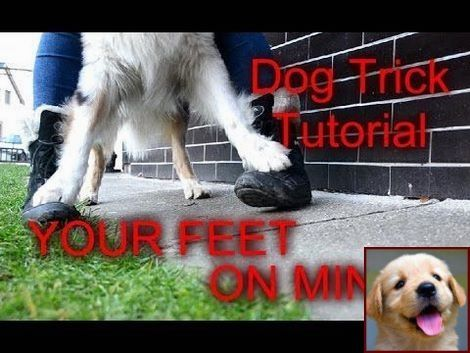 House Training A Puppy While Working And Clicker Training