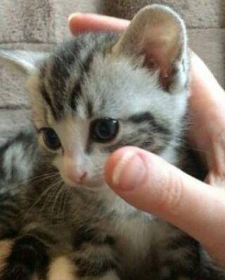 Cute Cat #cat #cats #cute #animals