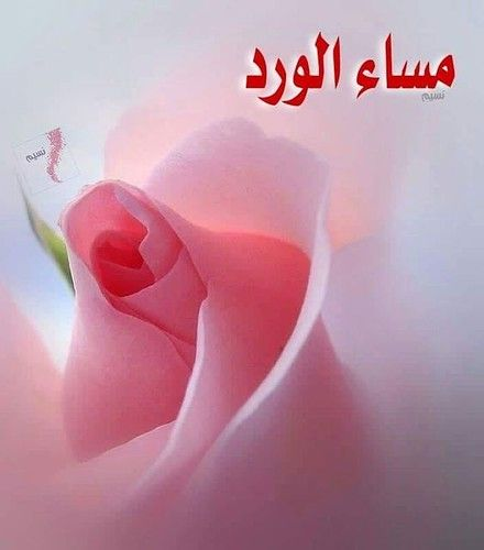 326fc571c861071bf0eb0587ecfe7061 Good Evening Greetings Good Evening Wishes Romantic Good Night Image