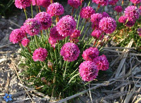 Купить семена цветов в интернет-магазине. Семена почтой