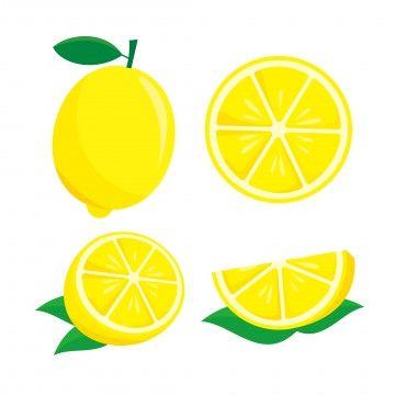 Lemon Fruit Vector Illustration Isolated On White Background Lemon Clip Art Citrus Lemon Food Png And Vector With Transparent Background For Free Download In 2021 Fruit Vector Clip Art Vector Illustration
