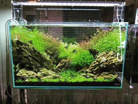 natura inspiration #tank (I don't...