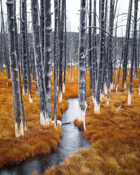 Parco Nazionale di Yellowstone, Wyoming, Stati Uniti d'America ♥ Seguici su www.reflex-mania.com