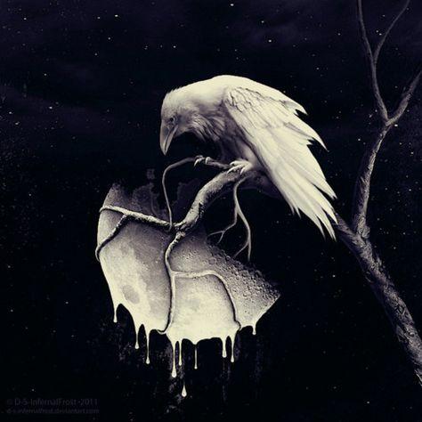 Raven, Crow, et Corbacs  987dabec61aca97c0d2f4a339c3f6814--crows-ravens-blackbird