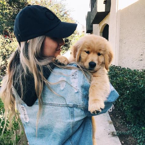 """Hudson on Instagram: """"Why wawk when you can have your peasant carry you😏 • • • #goldenretriever #dogs #puppy #puppiesofinstagram #dogsofinstagram…"""""""