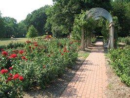 Bon Air Memorial Rose Garden in Arlington, VA is a stunning outdoor wedding venue option with its rose arbors.