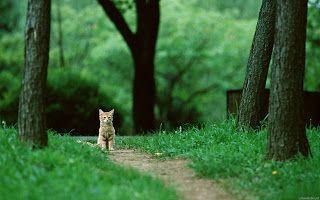 خلفيات فوتوشوب 2020 جاهزة للتصميم بدقة عالية Hd Animal Wallpaper Cat Wallpaper Animals