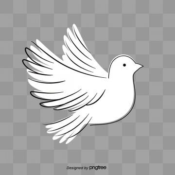 White Background Fresh H5 Dove Pictures Black Background Images Colorful Backgrounds