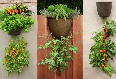 Cómo Extraer Aceite De Las Hojas De Menta Cultivo De Plantas Plantas De Tomate Cultivo De Hortalizas