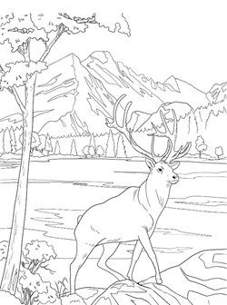 Kids N Fun Com 16 Coloring Pages Of National Parks United
