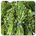 Organic Italian Flat Leaf Parsley