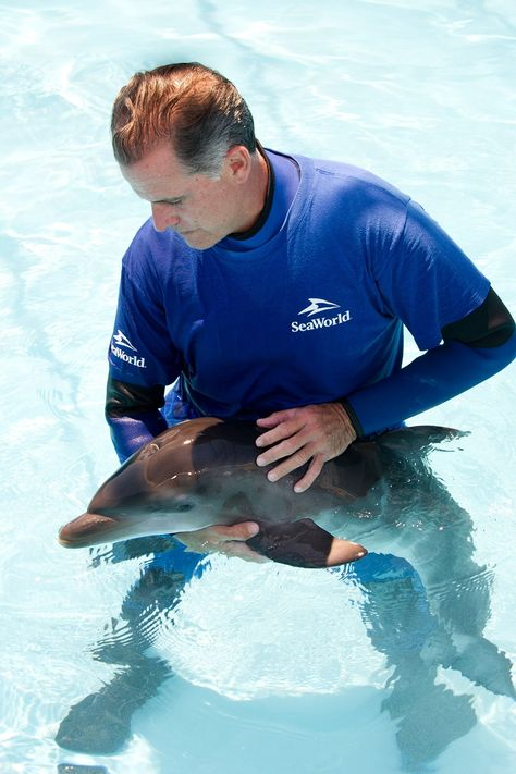 SeaWorld Orlando Rescues Newborn Dolphin Swim with the Dolphins - marine mammal trainer sample resume