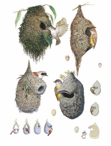 鈴木まもる 絵本原画と鳥の巣コレクション展 鳥の巣がおしえてくれること 会期 2018年07月21日 2018年08月26日 時間 9 00 20 00 会場 生活工房ギャラリー 3f アートデザイン 鳥 鳥の巣