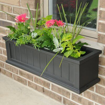 Charlton Home Selevae Self Watering Plastic Window Box Planter Size 48 Color Black Window Planter Boxes Planter Boxes Fall Clean Up