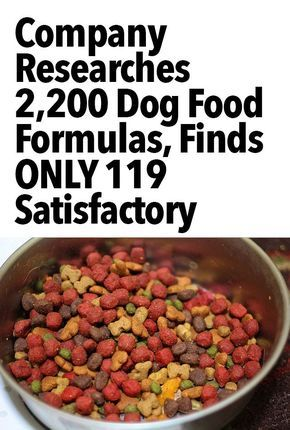 Company Researches 3 009 Dog Food Formulas And Finds Only 593 To