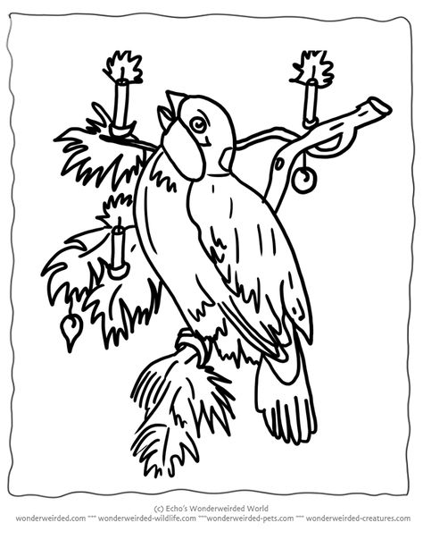 Free Printable Christmas Coloring Pages Birds , Echo's
