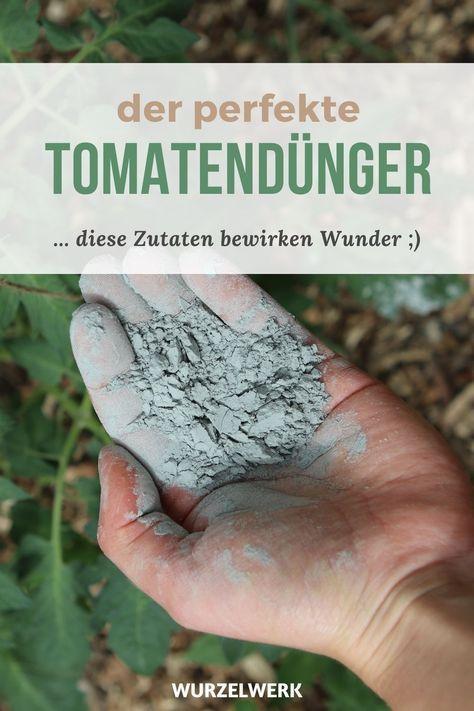 Tomaten Richtig Dungen Wann Wie Mit Welchen Dungern Wurzelwerk Gartnern Kartoffeln Pflanzen Mehrjahrige Pflanzen