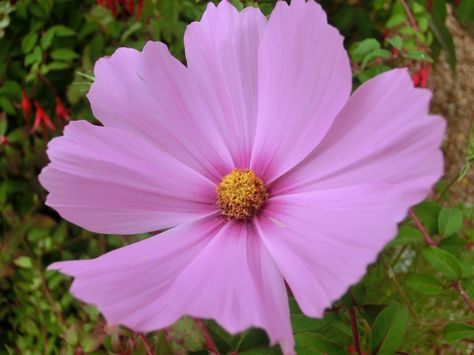 Fonds D écran Nature Fleurs Fleurs D Automne Fleurs