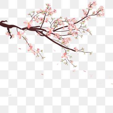 Fundo Aquarela Sakura Com Ramos De Cerejeira Em Flor Sakura Flor Desenhado Png E Vetor Para Download Gratuito Flower Clipart Cherry Blossom Petals Cherry Blossom Vector