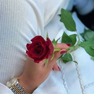 Follow For More Jjameel456 Beautiful Roses Red Roses Love Rose