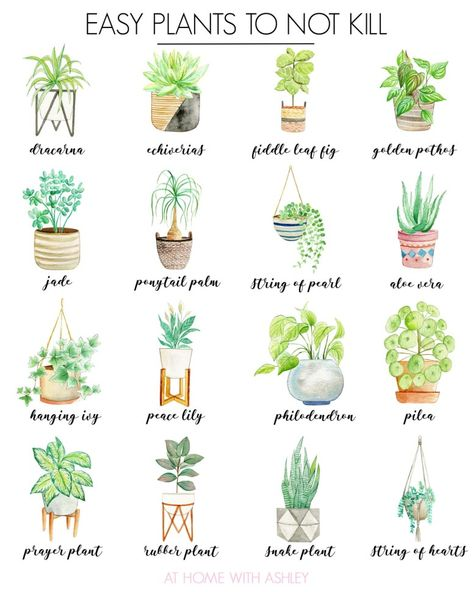 Here's your guide for how to get started with house plants! With ideas for house plant decor, tips to keep plants alive and easy plants to not kill. bedroom plants How to Get Started With House Plants - at home with Ashley Easy House Plants, House Plants Decor, Plants In The House, Vine House Plants, Cat Safe House Plants, Common House Plants, Diy Garden, Garden Plants, Plants Indoor