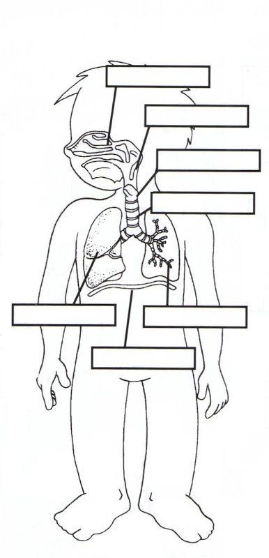 Las partes del cuerpo humano WIKIPEKES para niños