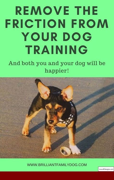 How To Teach Your Dog To Walk On A Leash Youtube And Pics Of How
