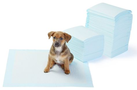 Itplus Pet Dog Daipers Cat Toilet Training Pads Indoor Puppy Pee Pads Disposable…