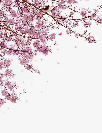 Cherry Tree Realism Cherry Blossom Clip Art Picsart Picsart Png