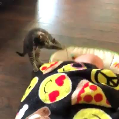 Cats are crazy
