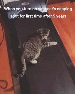 Cat on Running tape - Gifsopedia #Animals