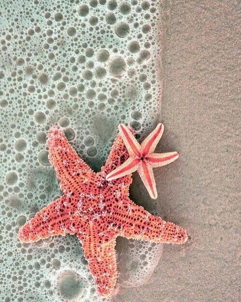 When you wish upon a (sea)star...🌟 #LIFEclothingco