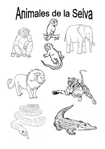 Te Cuento Un Cuento Animales De La Selva Para Colorear Animales De La Selva Imagenes De La Selva Selva