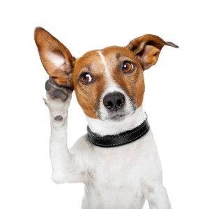 langage-corporel-chien