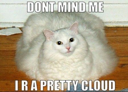 70 Most Hilarious White Cat Meme Funny White Cat Images White Cat Meme Cute Cat Memes Dancing Cat