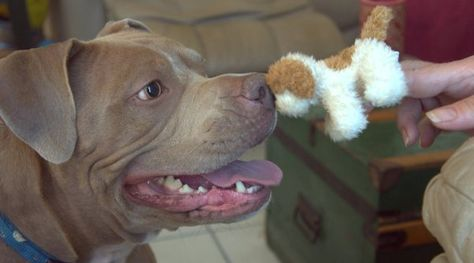 Can A Dog Bond With A Puppet Dogs Puppets Pets