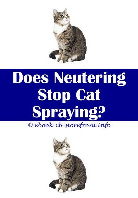 16 Unbelievable Stop Cat Urine Marking Admirable