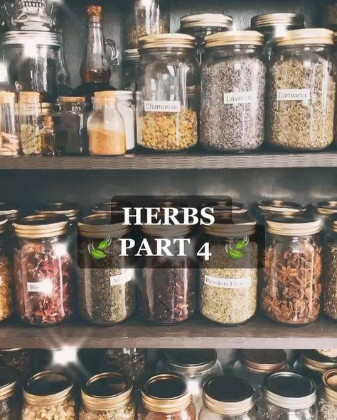 Witchcraft Herbs, Witchcraft Spell Books, Green Witchcraft, Magick, Herbal Witch, Witch Herbs, Magic Herbs, Herbal Magic, Jar Spells