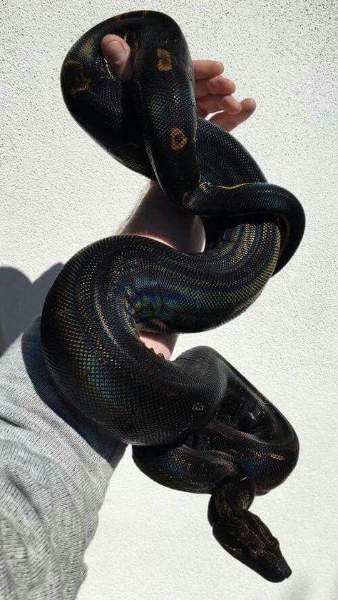 Serpent Aesthetic