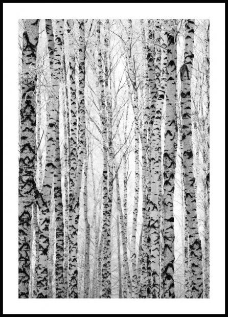 Poster Calendario 2020.Birch Forest Poster Berkenboom Bos Posterstore Nl
