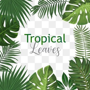Tropical Palm Leaves Png Png Free Download Palm Tropical Leaves Leaves Png And Vector With Transparent Background For Free Download In 2020 Tropical Leaves Spring Flowers Background Tropical Download as svg vector, transparent png, eps or psd. tropical palm leaves png png free