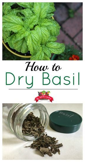 How To Urban Garden How to dry fresh basil from the garden or even the extra from grocery store packaged basil. It's so easy! - Don't let fresh basil go to waste. Dry fresh basil to use for months to come! Fresh Basil Recipes, Herb Recipes, Dinner Recipes, Healthy Recipes, Pruning Basil, Basil Harvesting, Preserving Basil, Herb Garden Design, Herbs Garden