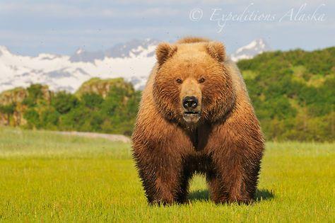 Alaska Brown Bear Photo Tour Slideshow