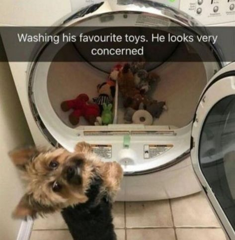 Wash The Toys In The Washing Machine The Washing Machine Is